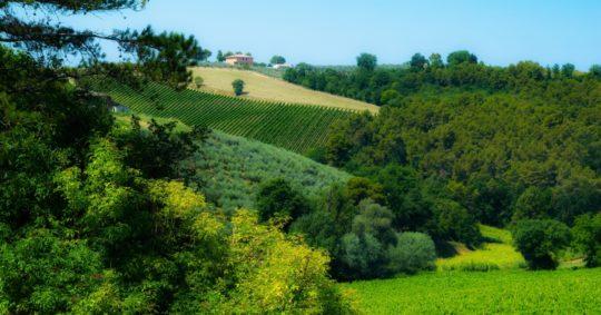 Cantina Villa Mongalli